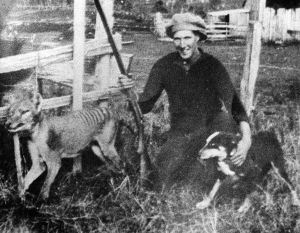 Wilf Batty with the last thylacine that was killed in the wild